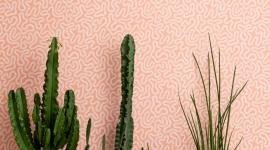 Papier peint Coral Peach Blush - MissPrint