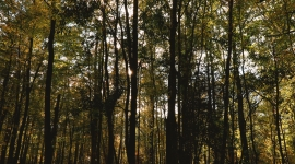 Forêt Loire Valley Lodges