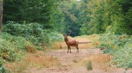 Nature Loire Valley Lodges